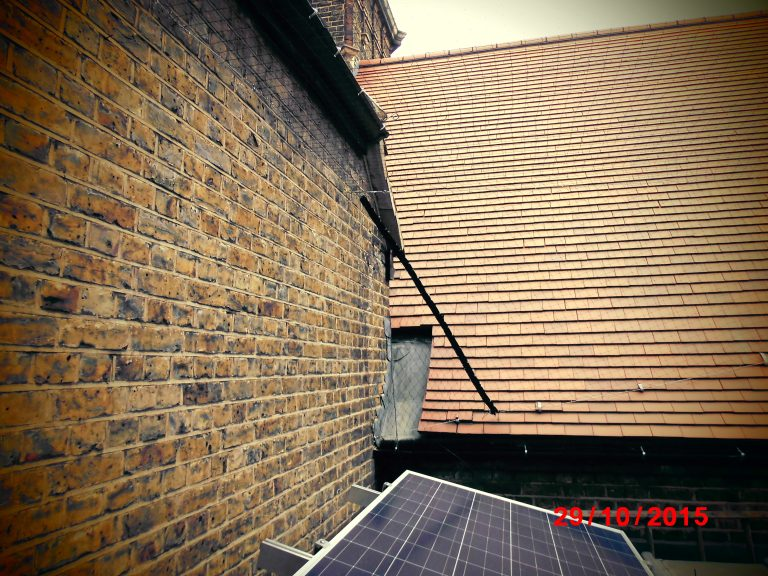 DSCI0295 Bird 768x576 - Netting carried out at a school in South East London