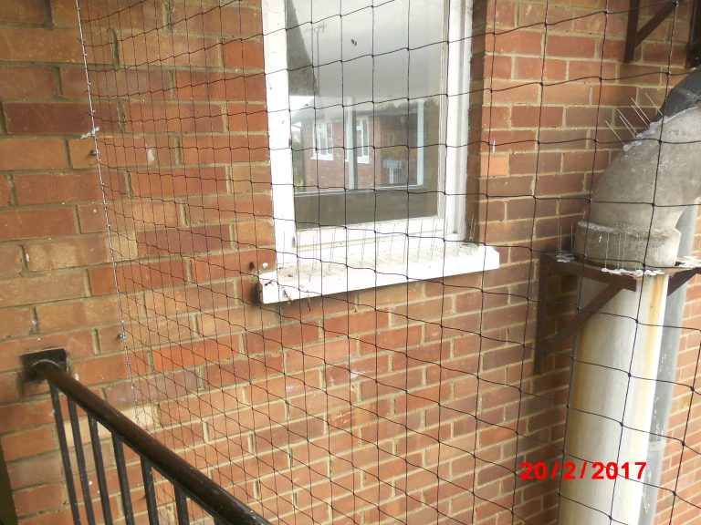 DSCI0488 Bird 768x576 - Balcony netting examples in North London