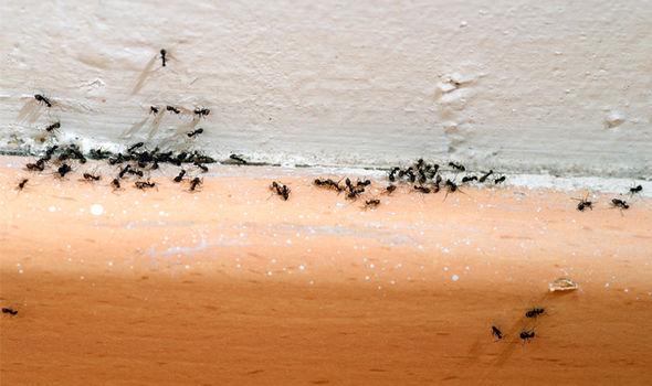 ants - Ant Problem