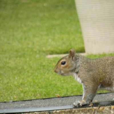 services squirrel 400x400 - Services